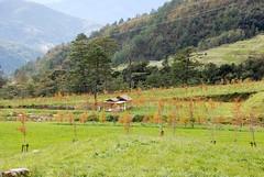 DSC_8496 (calium) Tags: foliage 楓葉 武陵農場 wulingfarm