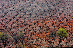 (HORIZON) Tags: autumn red black green fall nature landscape ilovenature persian vineyard scenery photographer iran horizon persia iranian iloveautumn 40d mywinners canon40d exposuretime1100 canon100400mmlisusmlens fnumber25 focallenght260 260x16416mm