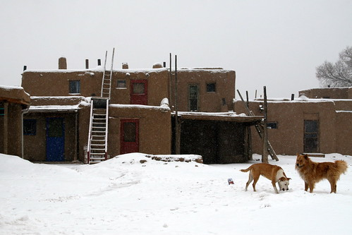Puppies Playing in the Pueblo