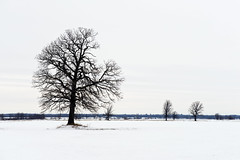 merry christmas (uwajedi) Tags: christmas winter sky cloud snow ontario canada tree field rural day bare ottawa country overcast