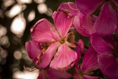flores (Jayme Diogo) Tags: flores nikon rosas jayme d40 diooh