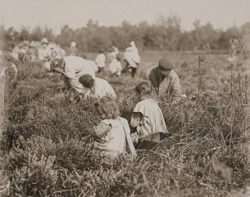 Children Picking Cranberries, Pemberton,New Jersey - September