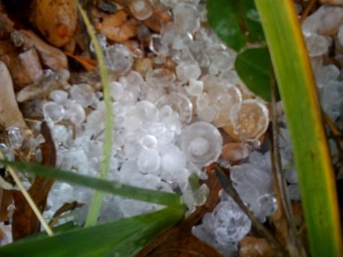 Fallen hail