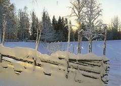 FI-267537 (masito76) Tags: finland postcrossing frozenlake