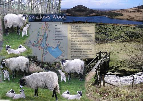 Ogden Clough and Swineshaw walk