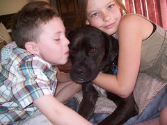 2 Kids & A Dog (Honey Lissa) Tags: kids fun mutt mix kiss pitbull boxer hugs briana vader 2008 tre bri
