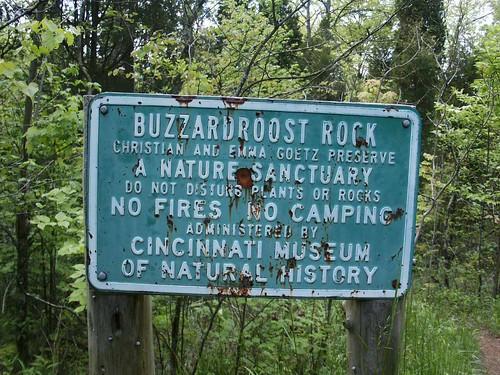 buzzard02