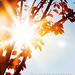 autumn sunshine by mel.alexa