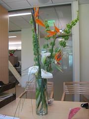 Flowers 2 (zoxozo) Tags: flowers birdofparadise callalily