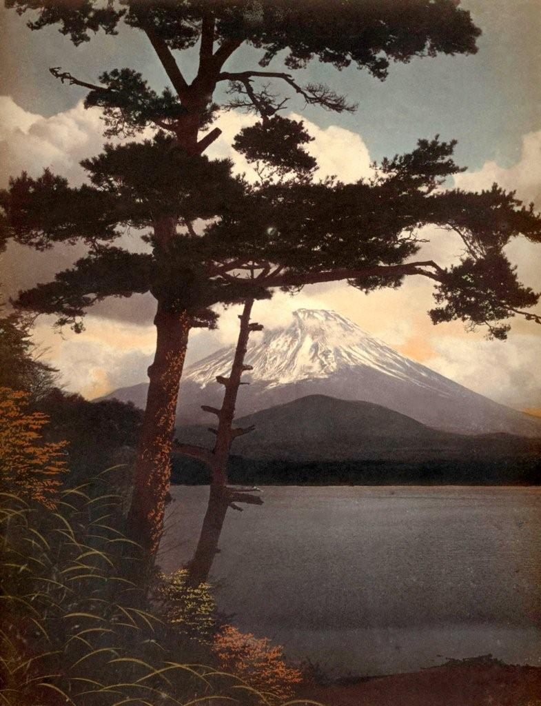 MT.FUJI THROUGH THE PINES IN THE BRISK MORNING LIGHT