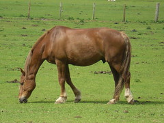 Enjoying an afternoon snack (ruralguygraham) Tags: horse field scotland searchthebest sunny galope blueribbonwinner mywinners