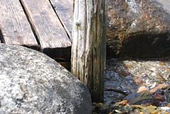 Bryggans Milj (skotte28) Tags: ocean wood sea rocks sweden sverige sten vatten havet brygga vstkusten tr grebbestad smsten bohus tng