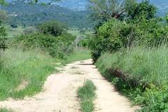 DSCF2903 (Greg Douglas) Tags: africa 2006