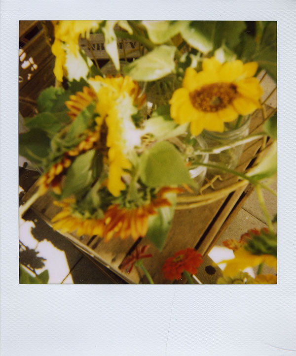 july19: sunflowers