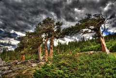 Bristlecone Pine, Mount Evans Scenic Byway (Thad Roan - Bridgepix) Tags: mountains tree pine clouds forest colorado rocks scenic alpine hdr mountevans bristleconepine byway photomatix mywinners abigfave anawesomeshot 200807