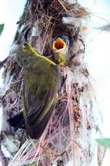 sunbird (kuijiegogo) Tags: motherhood sunbird
