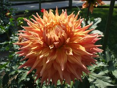8-27-08 (9) (jlohun) Tags: flowers summer indiana elkhart