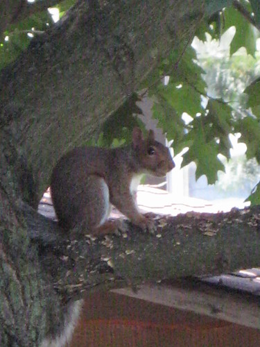 SUMMER 2008, Squirrel