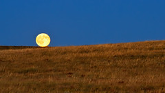 Harvest Moon On the Line (Fort Photo) Tags: moon night landscape carr evening nikon colorado nightscape searchthebest harvest luna full fullmoon moonrise co bluehour prairie rise grassland 2008 169 lunar grasslands larimer neco d300 anawesomeshot