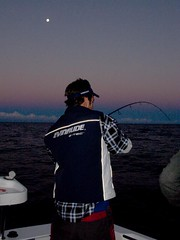 Hooked up, and winning at dusk (2Dans Fishing) Tags: tv dvd fishing australian snapper longreef risingmoon 2dans