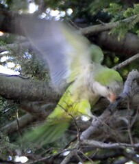 city nyc newyorkcity urban ny newyork green bird nature cemetery brooklyn nest greenwoodcemetery greenwood parrot