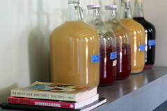 brewhaus (pocket farmer) Tags: homebrewing winemaking fruitwine countrywine