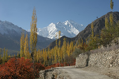 Autumn in Hunza 2008 250 (ghazighulamraza) Tags: colors view autum panoramic mount valley colourful rakaposhi hunza northernpakistan gilgit snowpeaks landscapephotography otw northofpakistan valleya northpakistan historyofpakistan mountainsofpakistan worldwidelandscapes natureselegantshots northerareasofpakistan flickrclassique pakistanilandscapephotographer ghazighulamraza pakistanilandscapre autumofhunza hunzahunzaautumautum