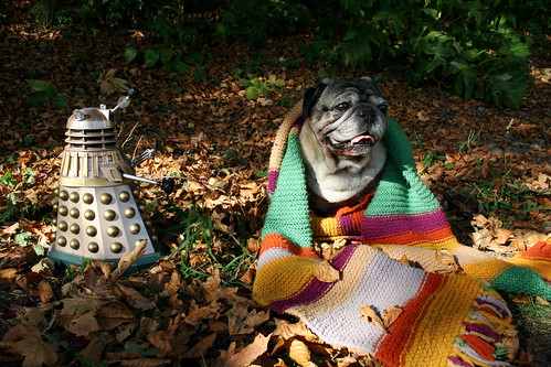 Doctor Who as Pug - Regeneration Gone Wrong!