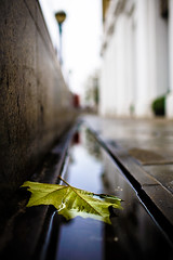 Leaf in the Gutter (LL01773) Tags: uk england green slr london water rain digital canon eos leaf pavement path low perspective 5d gutter 35l