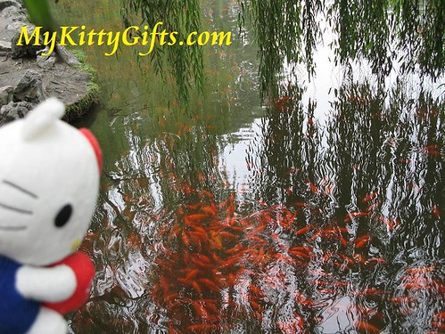 Hello Kitty's View of a Large School of Red Fishes under the Willow Tree Reflections on Red Carp Lake of Peony Garden, HangZhou