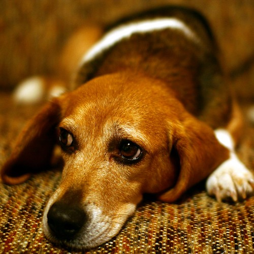 Sad Puppy Dog Eyes