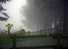 nebbia - fog (rosping-Giovanni Spatafora) Tags: nebbia