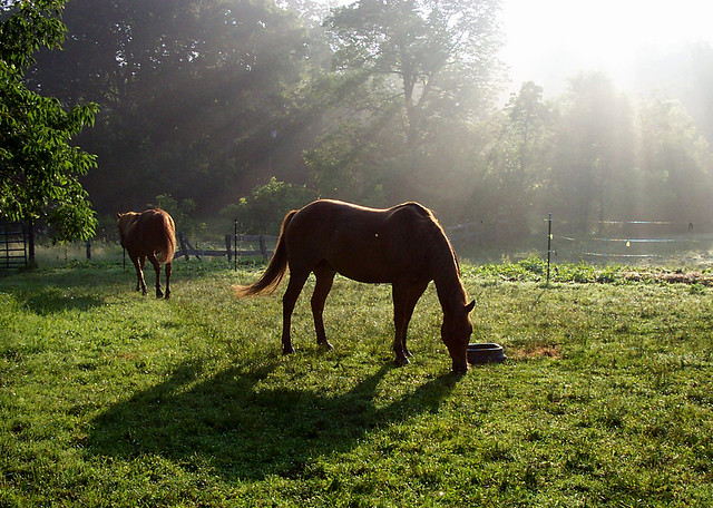 "morning ohio red horses sunlight love spring heaven photographer rays 1001nights numerouno rexx goldenglobe blueribbonwinner raysfromheaven anawesomeshot explorewannabe 100commentgroup moodcreations jennygandert gandert ""flickraward"" heavenlycaptures thisphotowantstobeexplored"