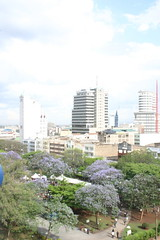 Nairobi Skyline with Jacarandas! (April Rinne) Tags: kenya nairobi jacaranda