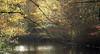 La mare en automne (Yvan LEMEUR) Tags: france automne mare paysage forêt etang loireatlantique orvault
