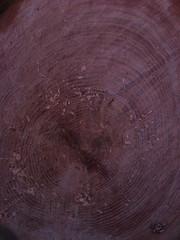 rings of life (VestandTie) Tags: tree treetrunk treerings sawdust