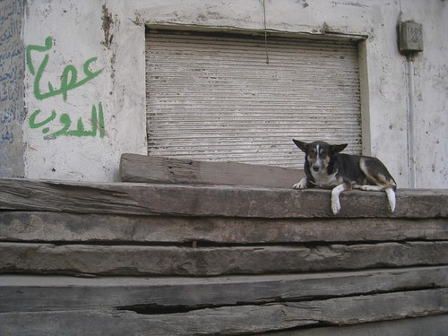 Dog chilling out in Islamic Cairo