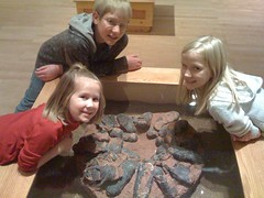 Real dinosaur eggs on display at the Sam Noble Oklahoma Natural History Museum
