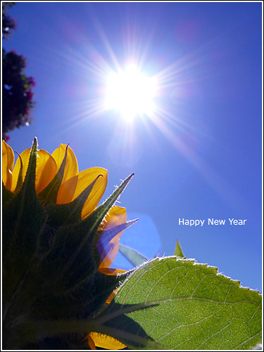 blog-2009-happy-new-year-sunflower