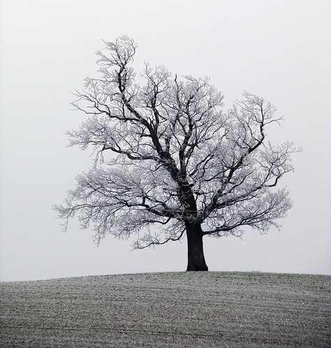 Lonely Frosty Tree by Nikki-ann of Notes of Life