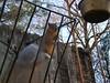 Squirrelly (boisebluebird) Tags: pets animals fun backyard squirrel squirrels boise critters rodents michaeltoolson boisebluebird boisebluebirdcom httpwwwboisebluebirdcom boiselandscaping boisegardener