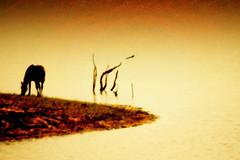 No remanso das aguadas... (Eduardo Amorim) Tags: sunset brazil horses horse southamerica field gua brasil criollo caballo cheval atardecer caballos agua tramonto sonnenuntergang dam prdosol barragem campo cavalos pelotas damm pferde cavalli cavallo cavalo pferd riograndedosul barrage pampa poniente champ anoitecer coucherdesoleil hest aguada hevonen campanha brsil chevaux entardecer crepsculo  amricadosul aude poente diga hst  amriquedusud   sudamrica suramrica amricadelsur  sdamerika crioulo caballoscriollos criollos  costadoce americadelsud  crioulos cavalocrioulo americameridionale caballocriollo auffangen eduardoamorim cavaloscrioulos