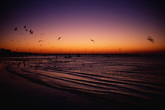 sunset (*Cyrus`*) Tags: bridge sunset sea birds lights seagull australia melbourne frankston goldenglobe rvp50 fujifilmvelvia50 aplusphoto leicasummicron35mmf20iv auselite fujichromevelvia50rvp konicahexarrflimited leicasummicron35mmf2iv