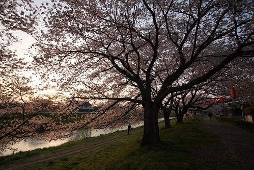北越谷の桜堤