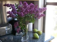 Lilacs--4-9-08 004