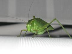 Hello Grasshopper
