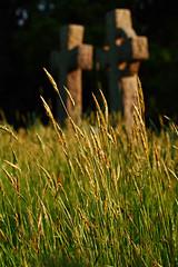 Grassy Graves (ElWanderer) Tags: uk england overgrown cemetery grave grass golden evening woking tombstone surrey graves growth tombstones shallowdepthoffield shallowdof horsell longgrass churchofstmarythevirgin canonef50mmf18ii