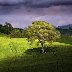 Enlightened (Dimiti) Tags: italy tree clouds landscape tuscany 2008 maremma d300 fffff