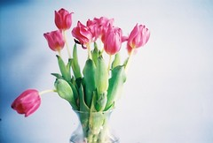 (for the love of photography) Tags: tulips myroom solovely formybirthday