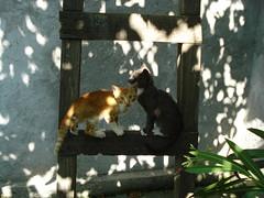 tigrisor si soricel (alesia17) Tags: kittens pete lumina labute pisici scara pisoi leandru dungi urechi vargat tigrisor